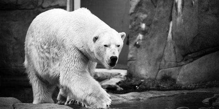 Niedźwiedź-na-horyzoncie